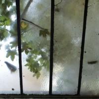 http://www.vincentprieur.com/files/gimgs/th-68_3_copie-de-dsc00500web.jpg